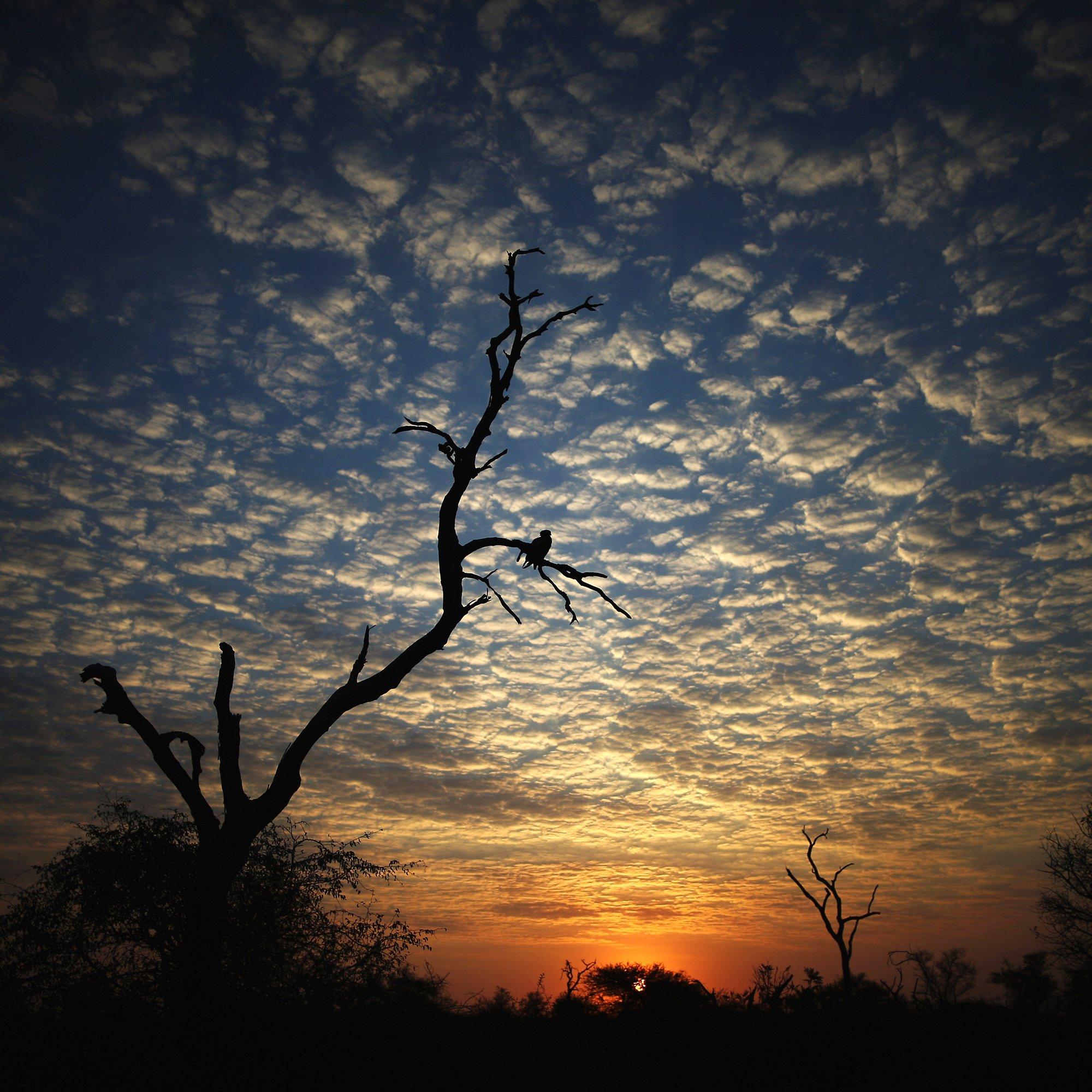 Solnedgång i Krugar nationalpark i Sydafrika.