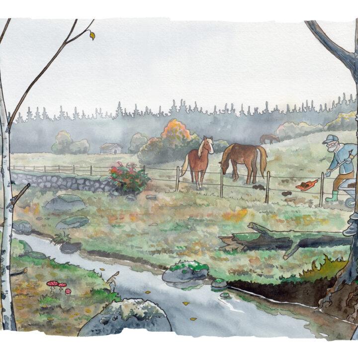 häst,hagebäck,vatten,människa