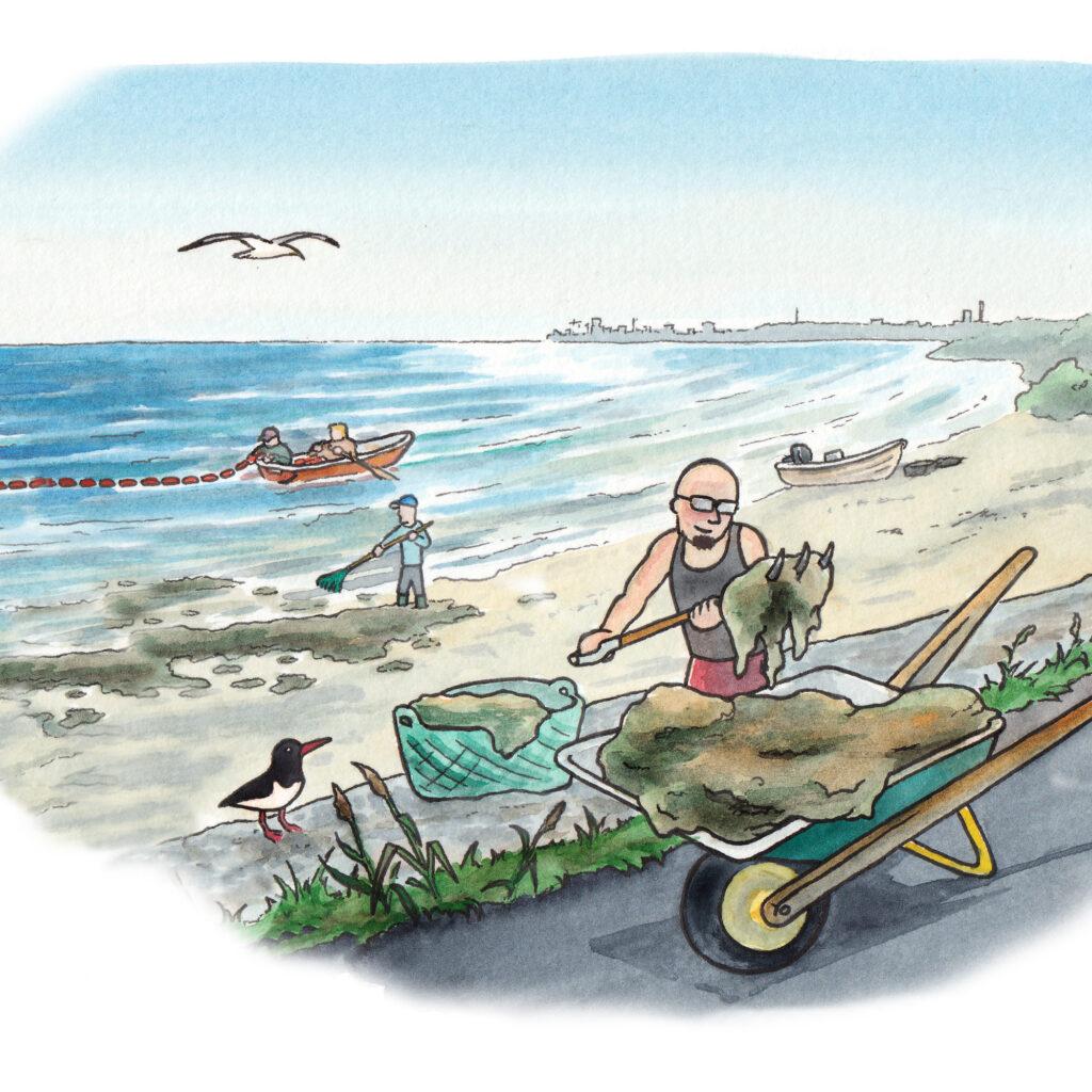 kratta,alger,fiskmås,skottkärra,grep,båt,vatten,strand
