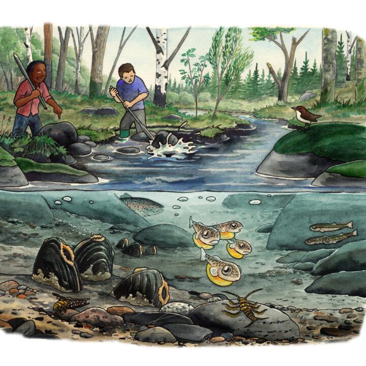 vatten,fisk,sten,människor