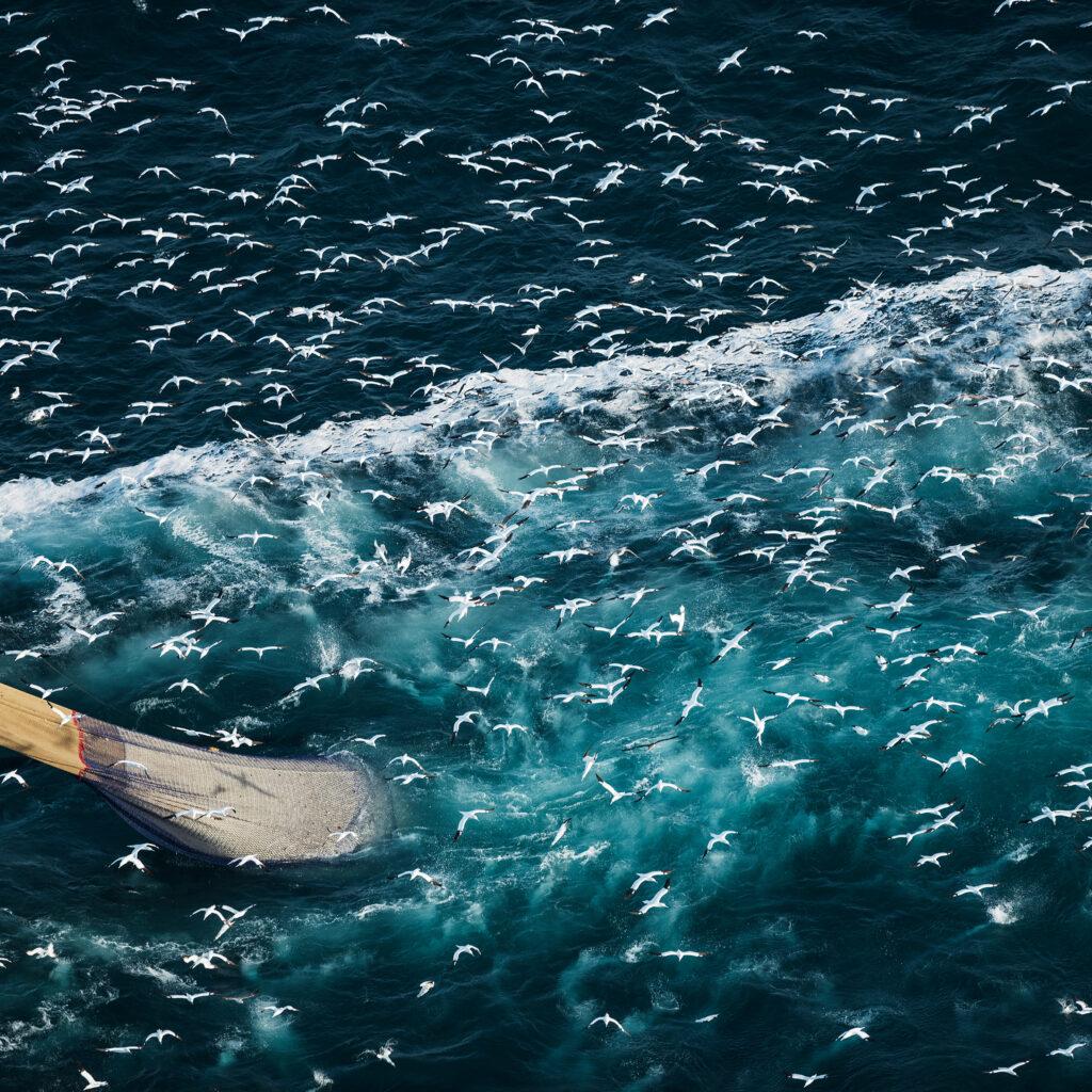 fiske,fiskenät,hav,måsar
