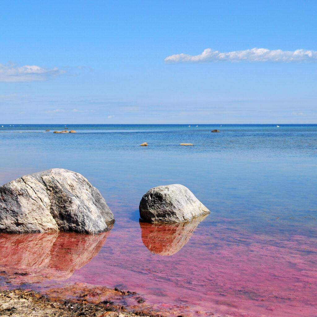 alger,algblomning,östersjön,strand,rosa,vatten,strand,stenar