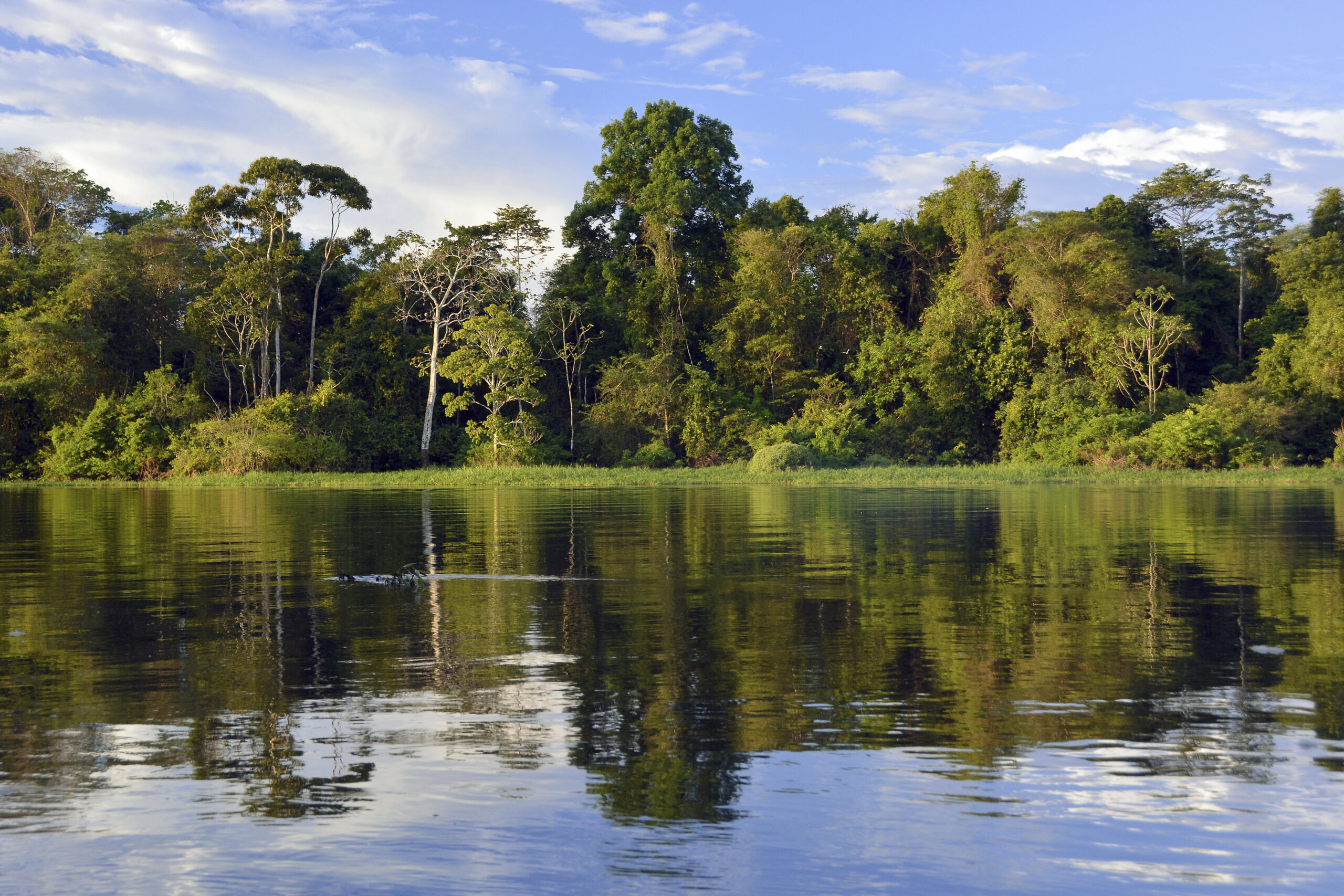 Bank of the Rio Solimoes river with flooded Varzea forest, Mamiraua National Park, Manaus, Amazonas, Brazil