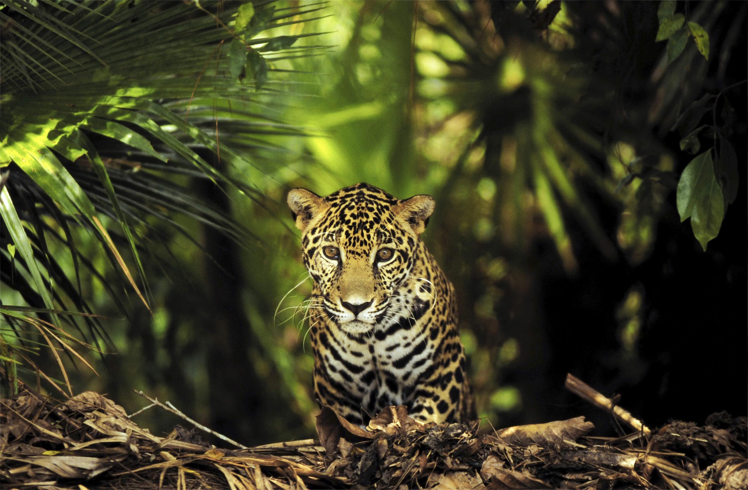 Amazonas biologiska mångfald är unik
