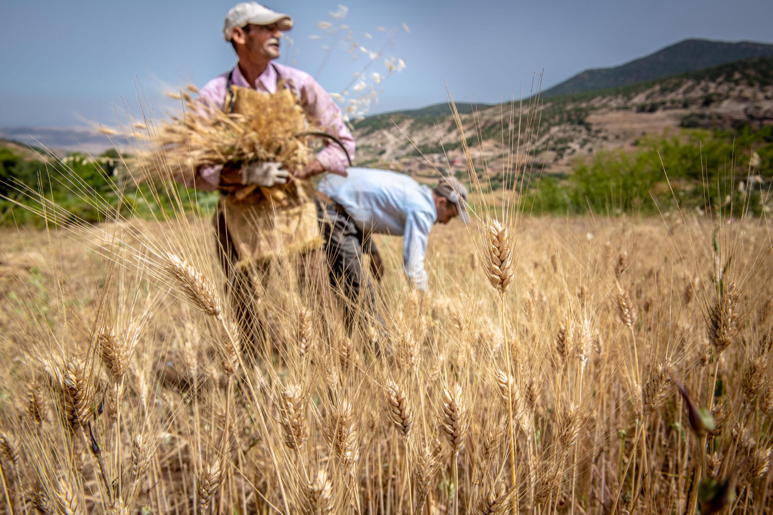 FN:s deklaration för småbrukares rättigheter.
