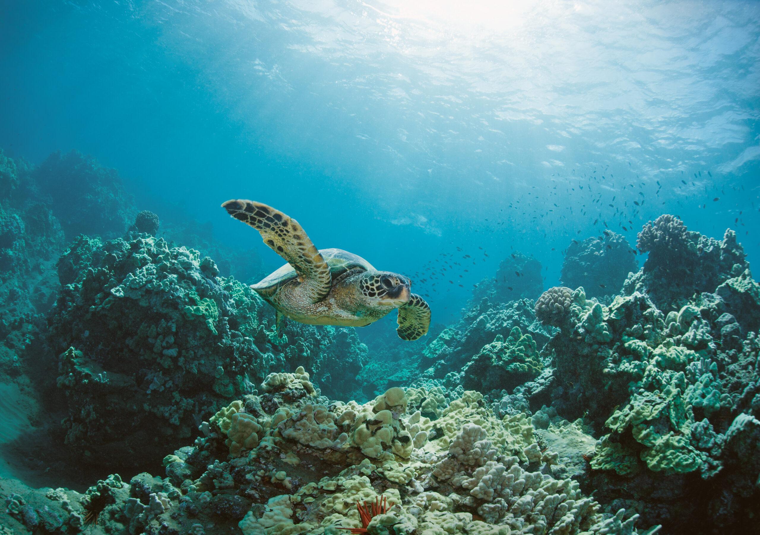 Trots att larmrapporterna om havskrisen avlöser varandra saknar fortfarande över 92 procent av havet skydd mot skadlig verksamhet.