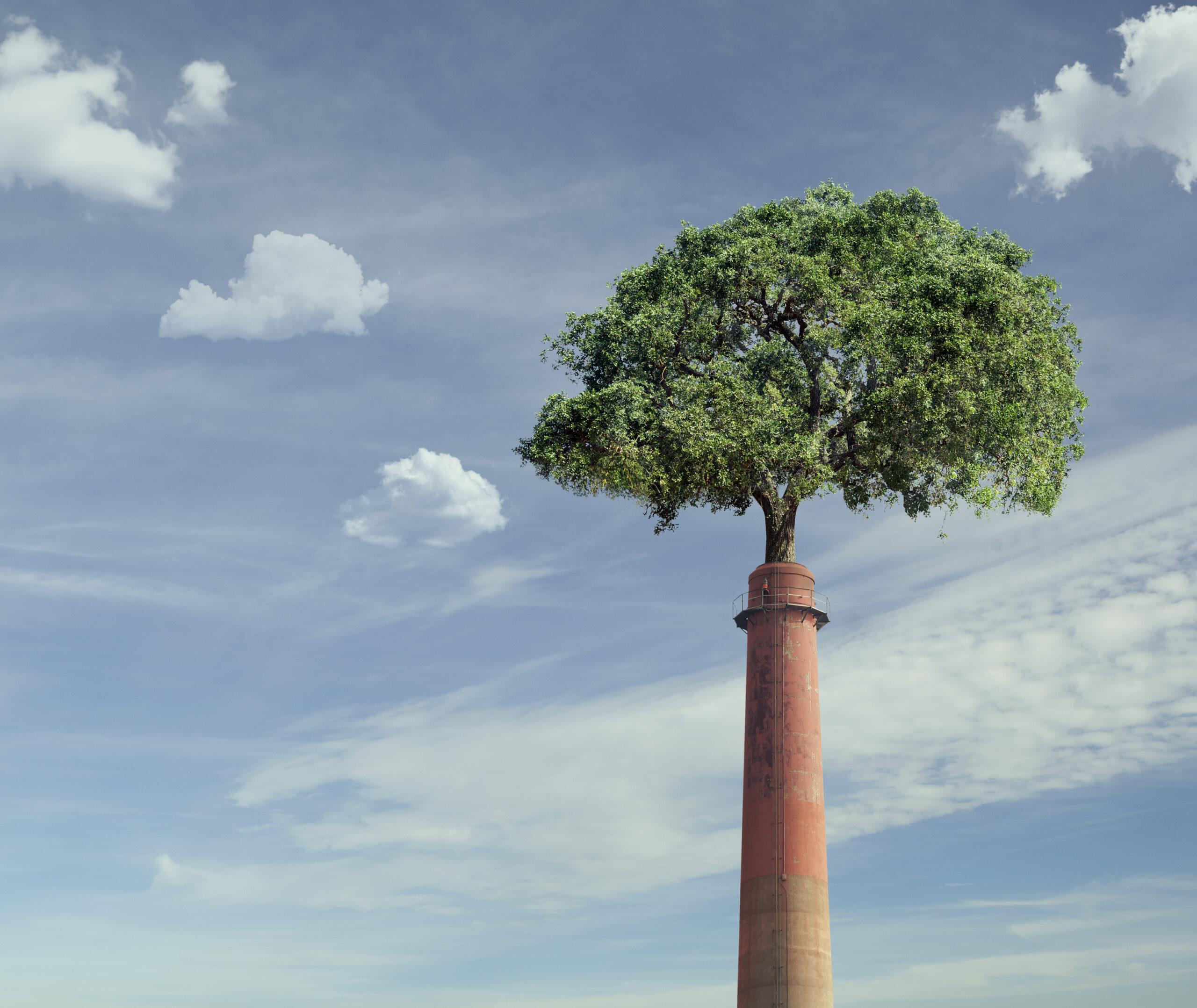 Träd växer ur skorsten.