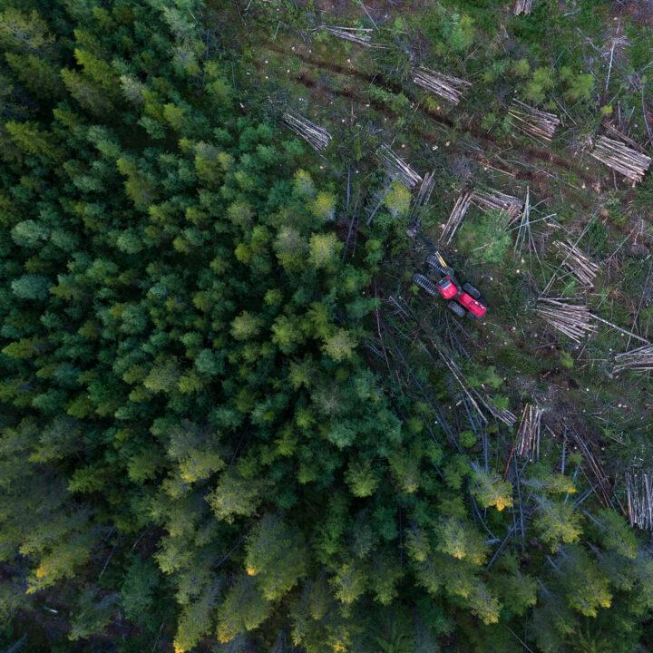 träd, skog, maskin, grön, avskogning, djur, liv, natur