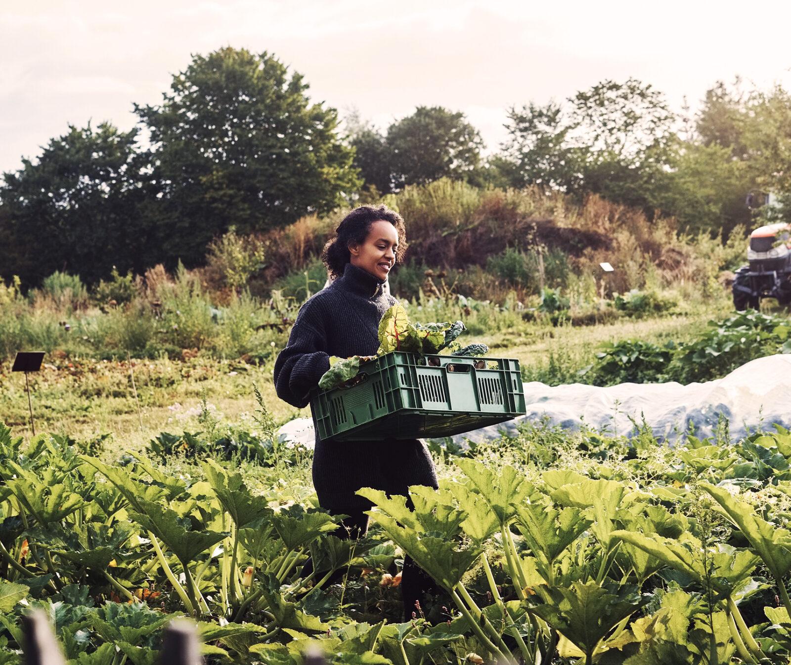 Kvinna, grönsaker, grönsaksland, odling, odlingslandskap, odlingar,