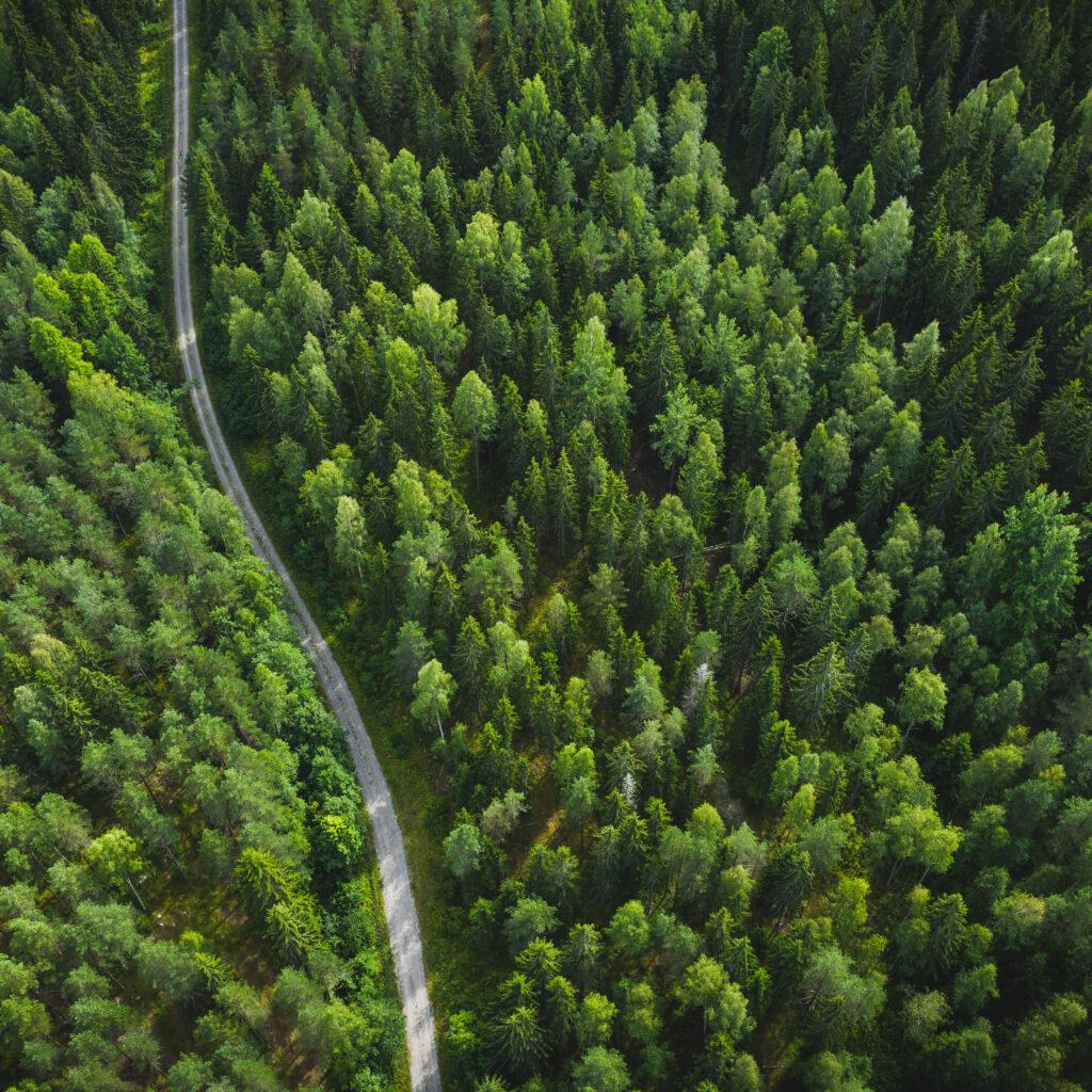 skog, väg, dag, gran, natur, miljömärkning, solljus, uppifrån