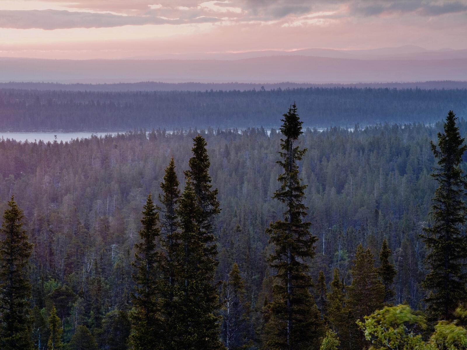 dalarna, landskap, trädtoppar, flygfoto, storslaget, rosa himmel,