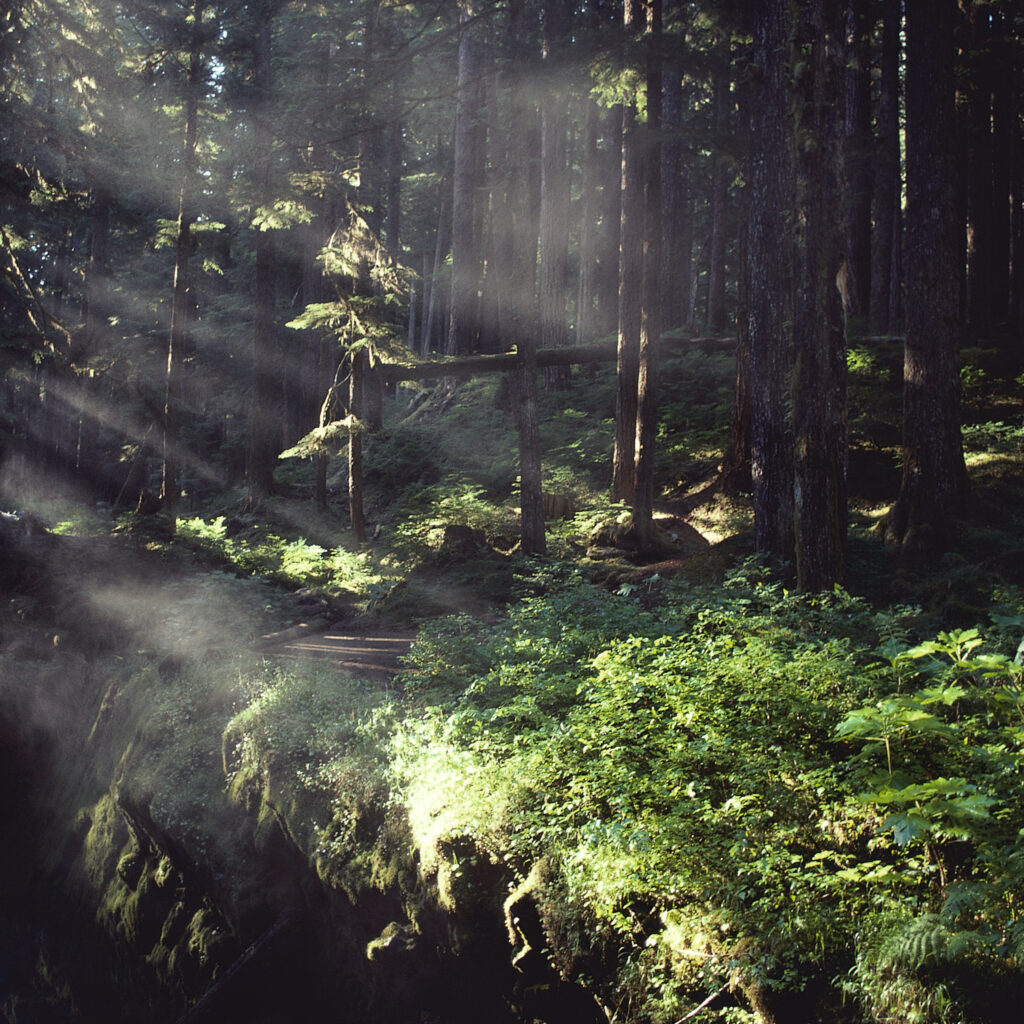 Solbelyst skog.