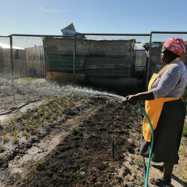 EMG, Sydafrika, vattna, slang, trädgård, odling, kvinna