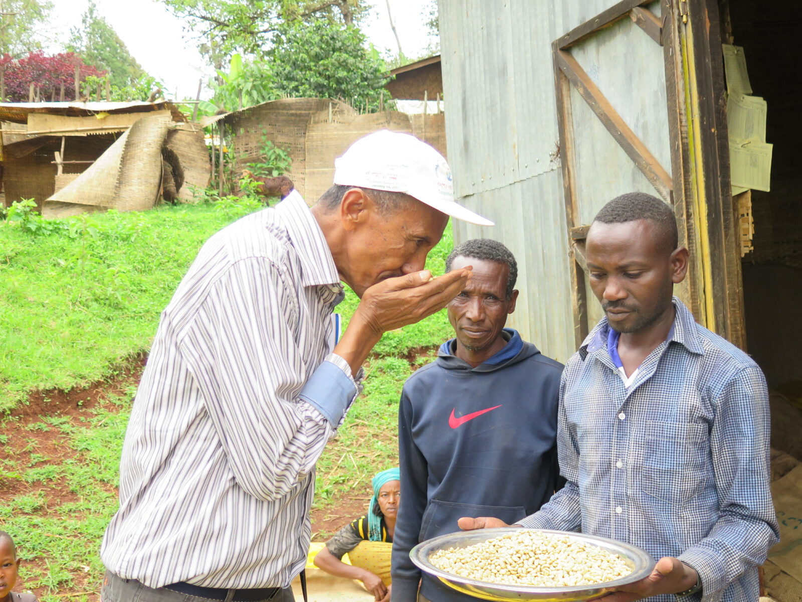 Oromia, Etiopien, kaffe, ISD, 2015, skuggkaffe, kaffe, ekologiskt, odling, Kaffeodling, kvalitetskontroll