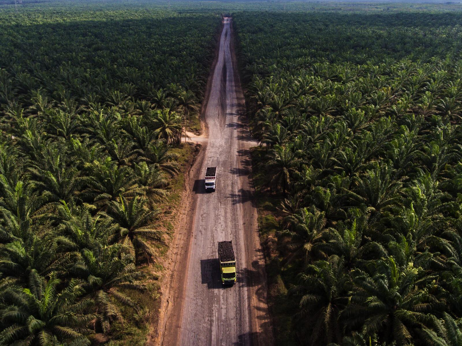 Indonesien, Palmolja, Palm Oil, Oil, Plantage, Deforestation, Avskogning, Exploatering