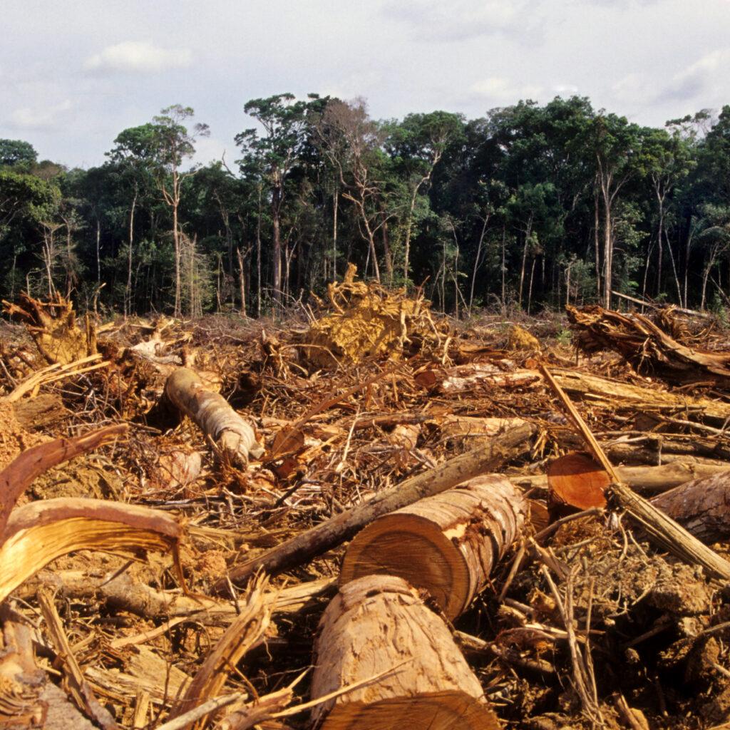 Rainforest, Photography, No People, Fallen Tree, Global Warming, Glade, Lumber Industry, Timber, Amazon Rainforest, Tropical Rainforest, Deforestation, Avskogning, Amazonas, Regnskog, Avverkning, Exploatering