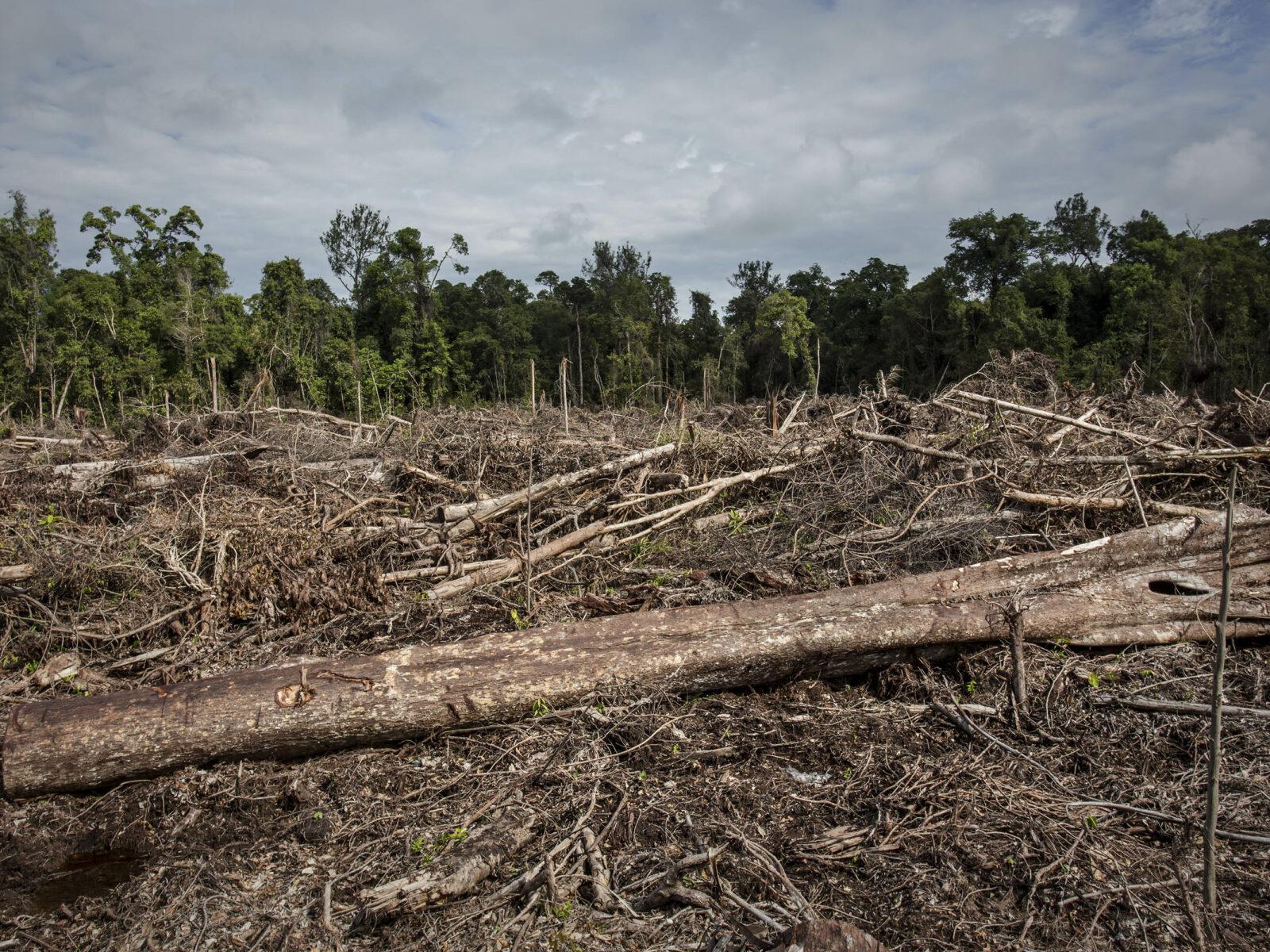 Palmolja, Plantage, Deforestation, Avskogning, Exploatering, Indonesien, Palm oil