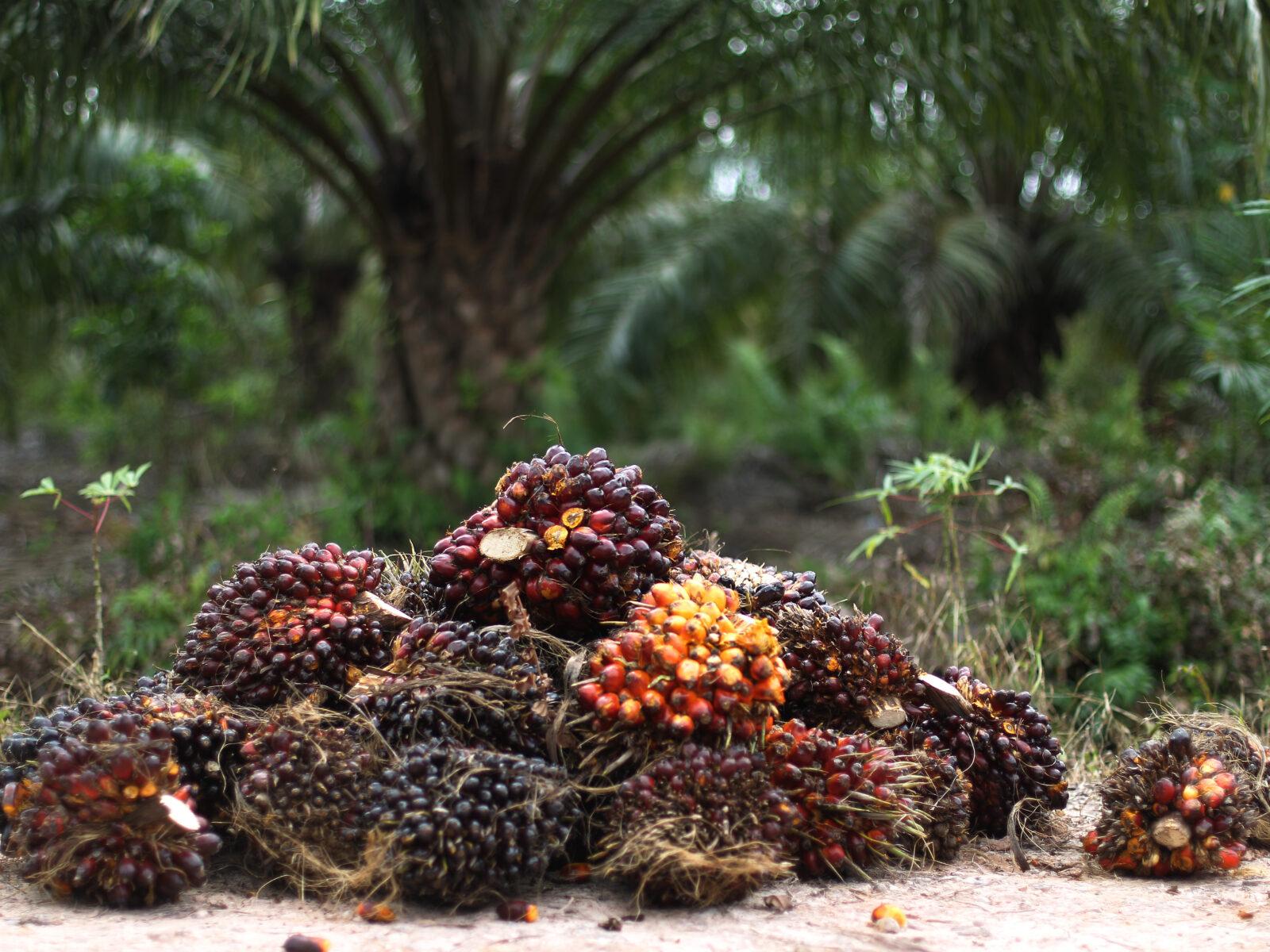 Riau, Indonesia, Palmolja, Plantage, Indonesien