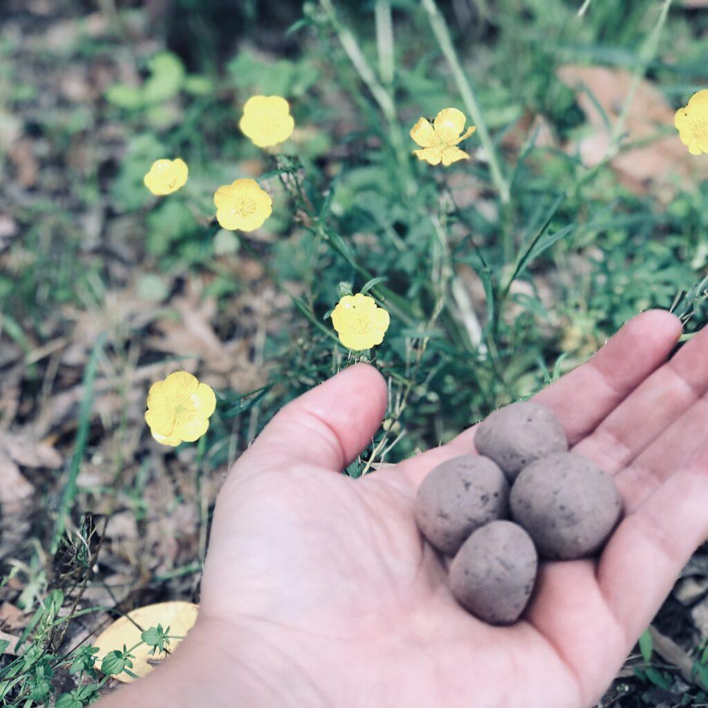 komposten, jord, leran, frö, mat, natur, bi, näring, miljö, blommor