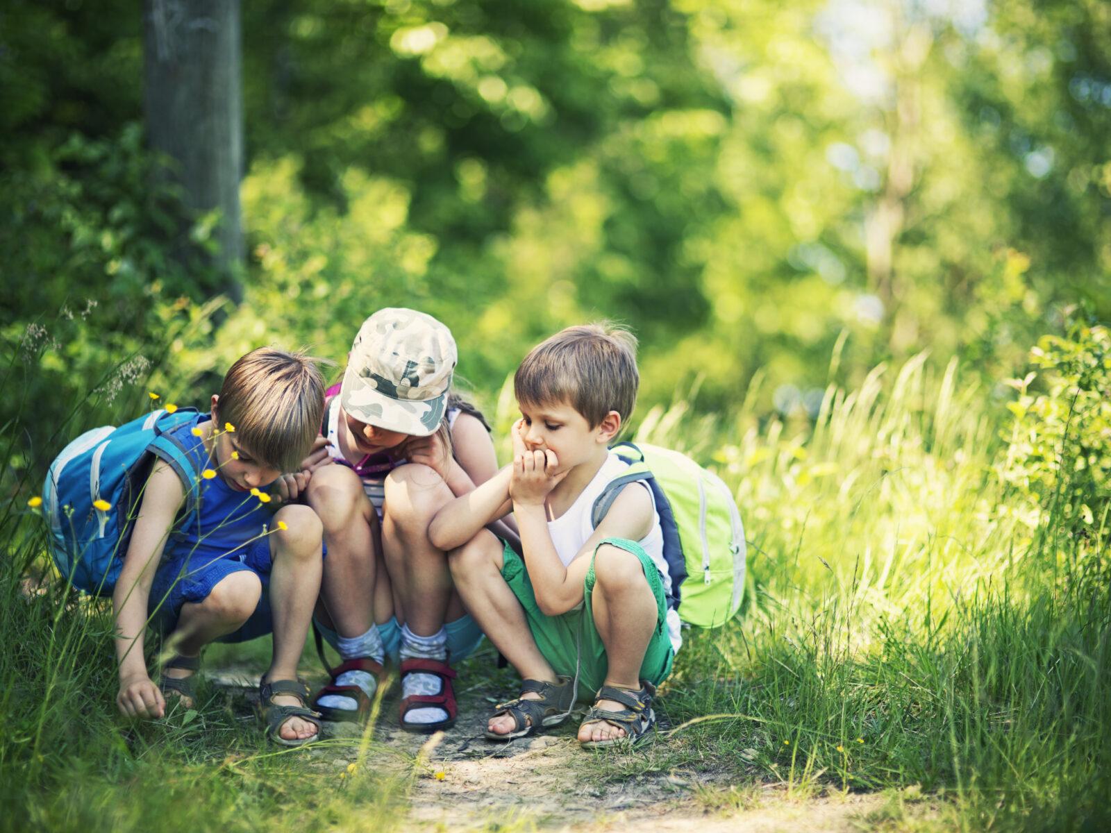 Barn, skogsstig, lek, testamente, insamling,