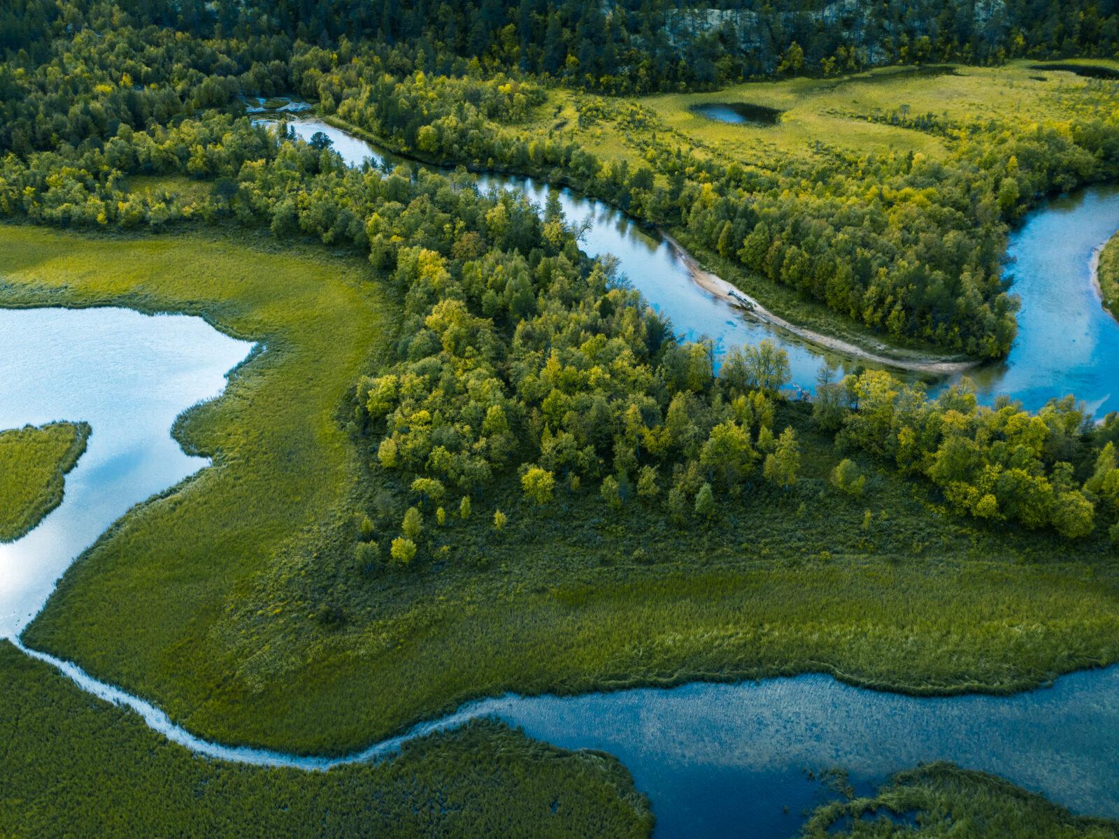 skog, å, träd, vatten, ovanifrån, grönt, våtmark, 1176867660