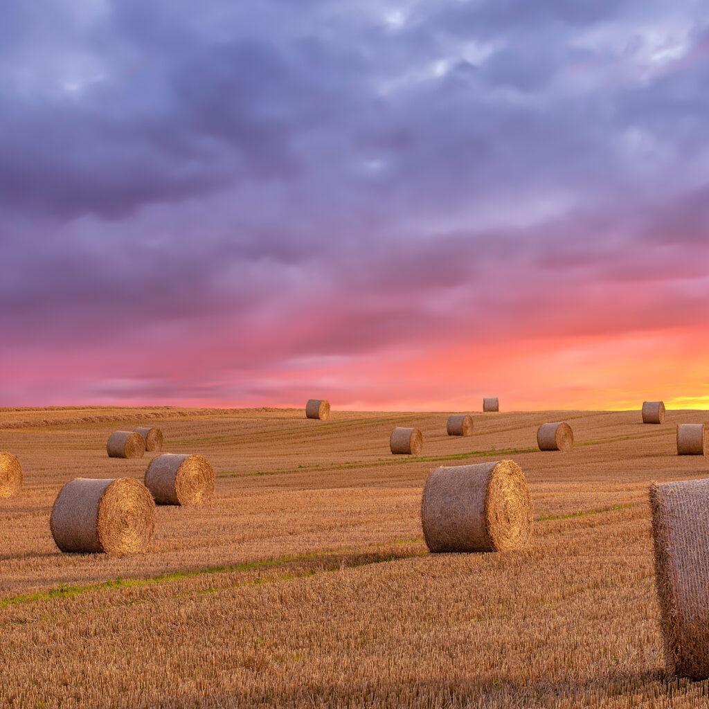 Jordbruk, mat, skörda, biologiska mångfald, bonde, kvällen, fält, produktion, klimat