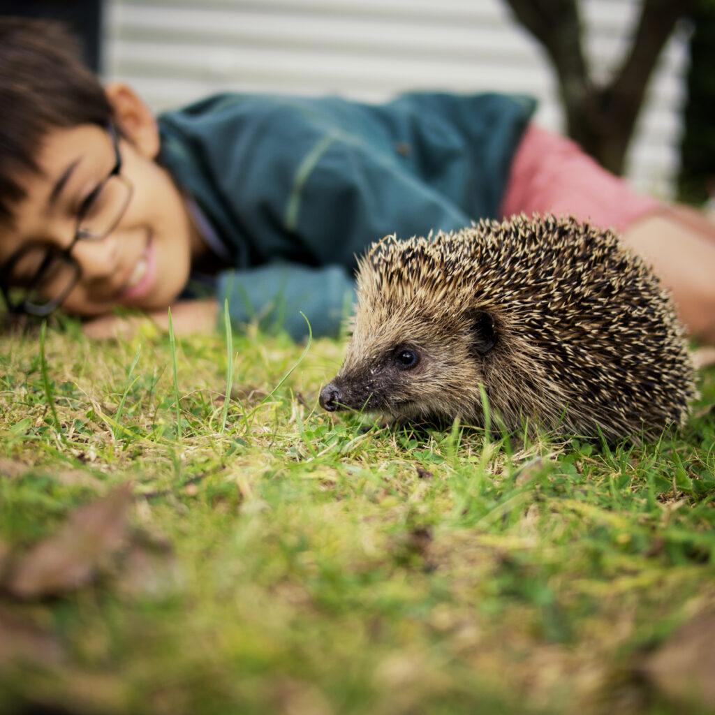 pojke, glasögon, gräsmatta, igelkott, löv, träd, hus, grön, djur
