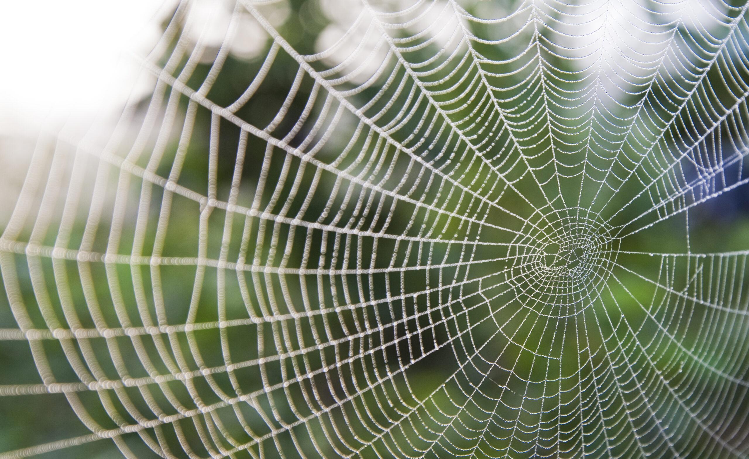 spindelnät,spindel,nät,nätverk,grön