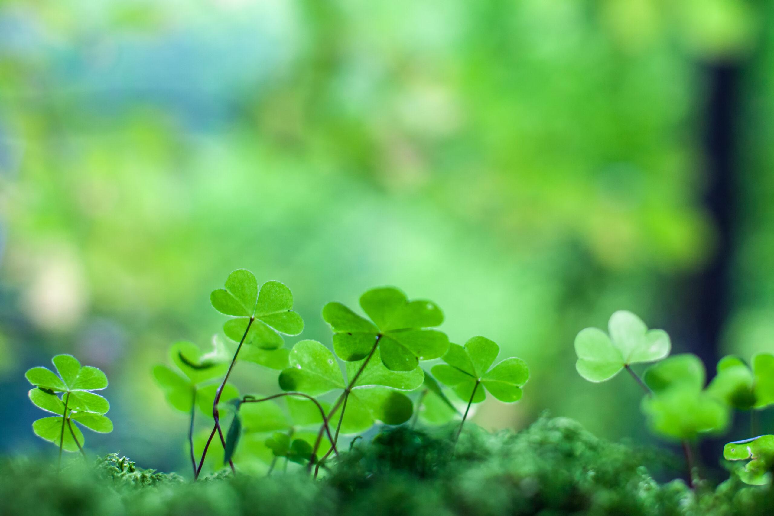 blad,grön,sommar,sol