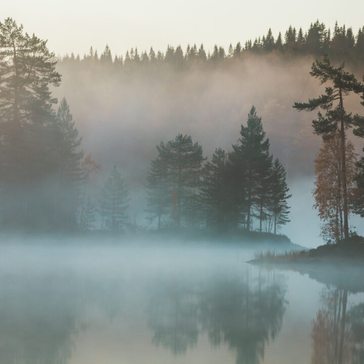 dis,dimma,vatten,träd