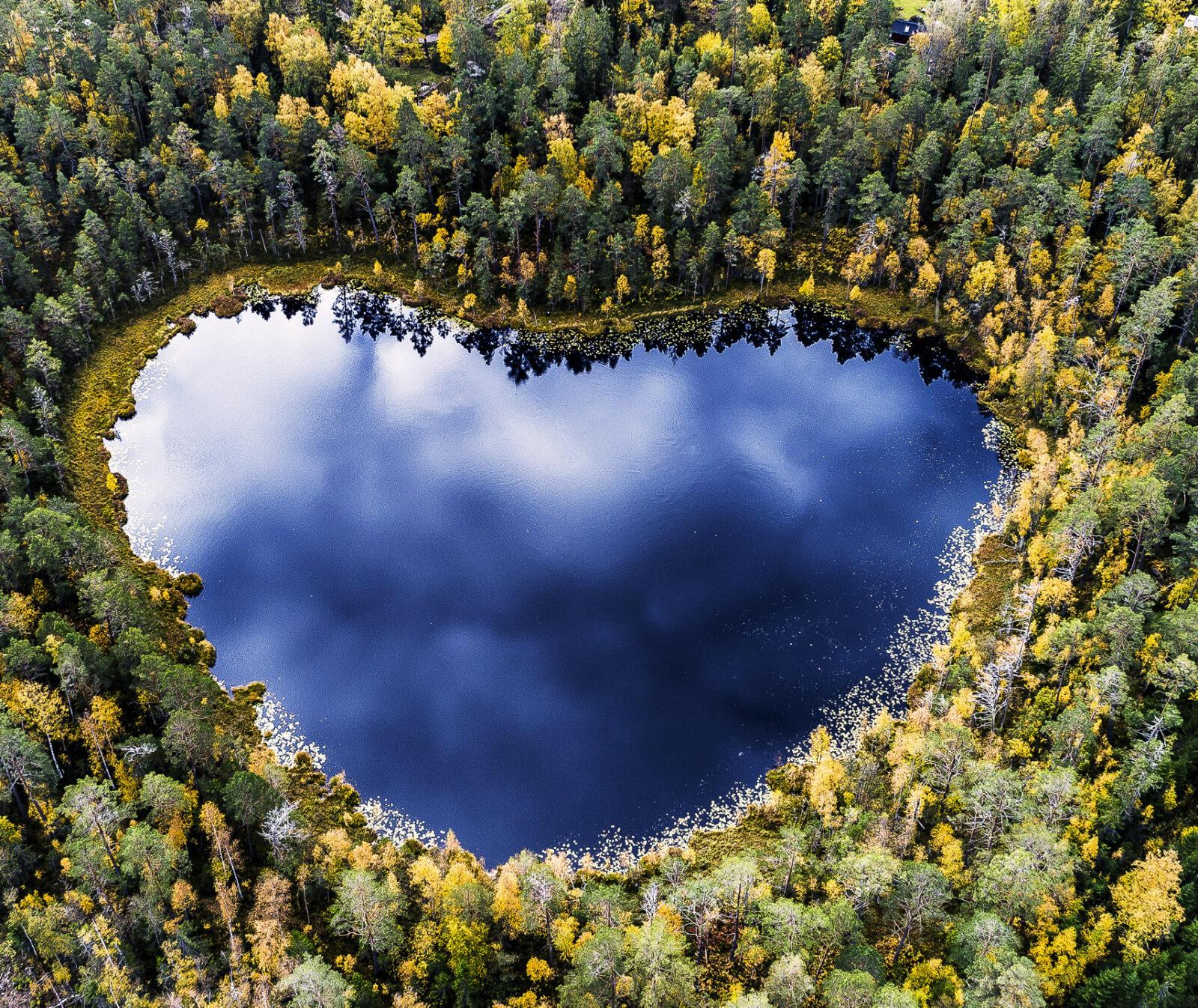 skog,vatten,höst,träd,grön,gul,blå