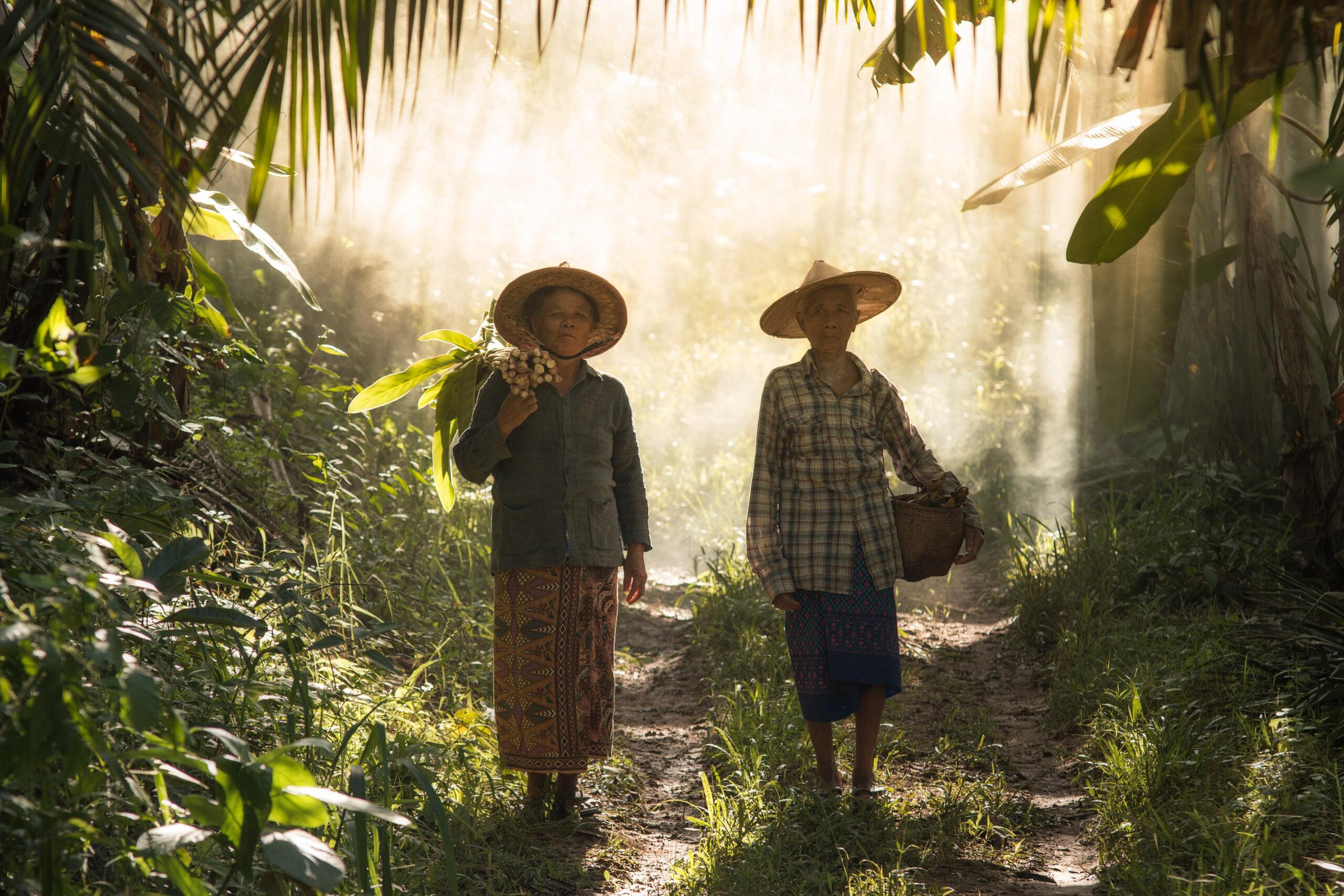 Urfolk, Thailand, Människor, miljöförsvarare, Asien, Skog, Globala