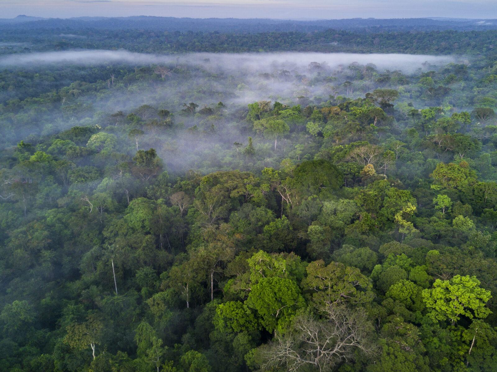 Amazonas, Regnskog, tropisk skog, global, Skog, Brasilien, Brazil, Rainforest