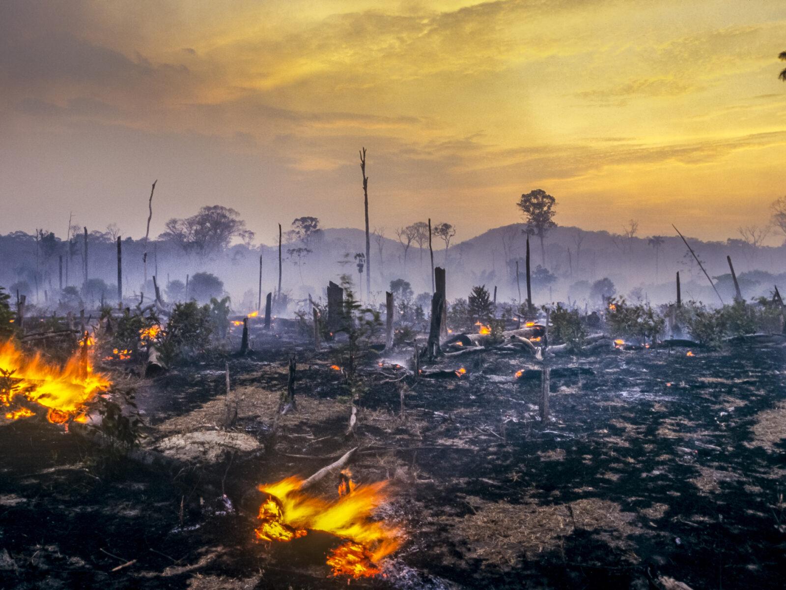 Skogsbrand, amazonas, brand, avverkning