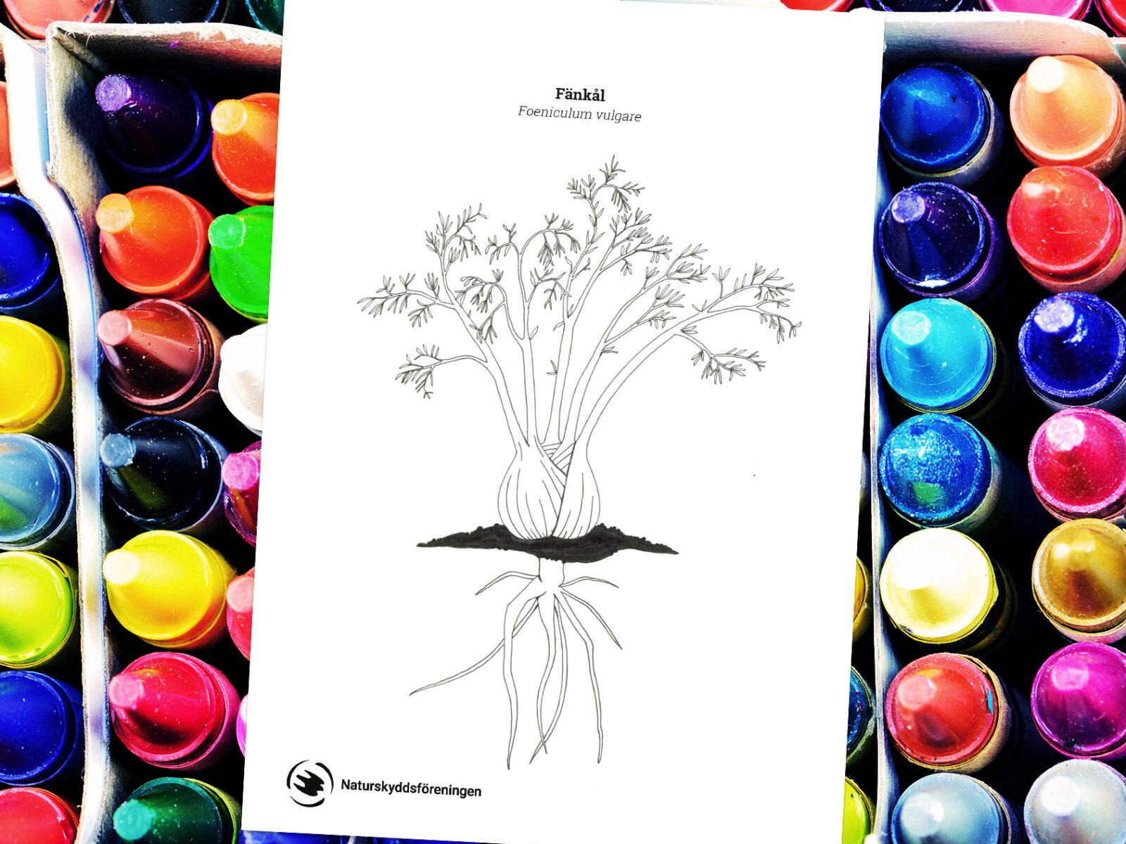 skolträdgård, skolträdgården, ritblad, växter, djur, trädgård, rita