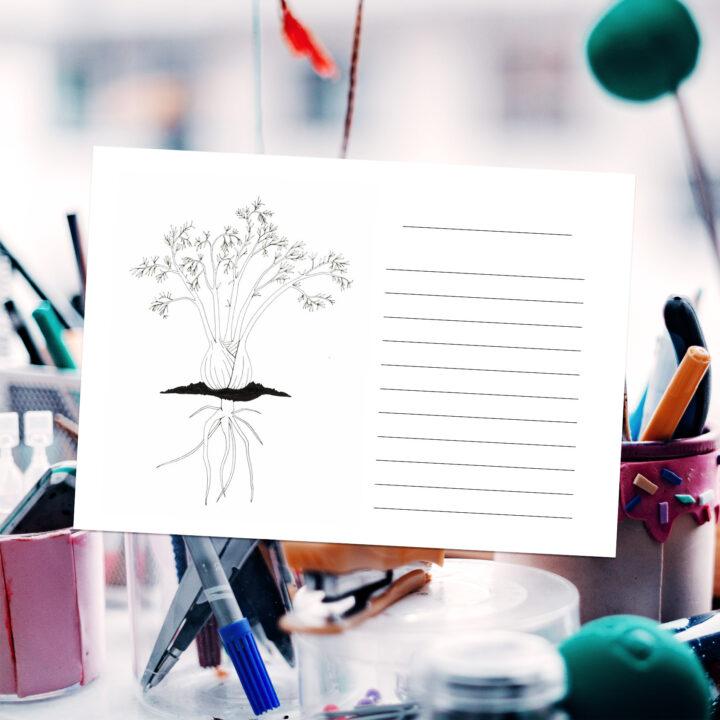 skolträdgård, skolträdgården, ritblad, skrivblad, växter, djur, trädgård, rita, skriva