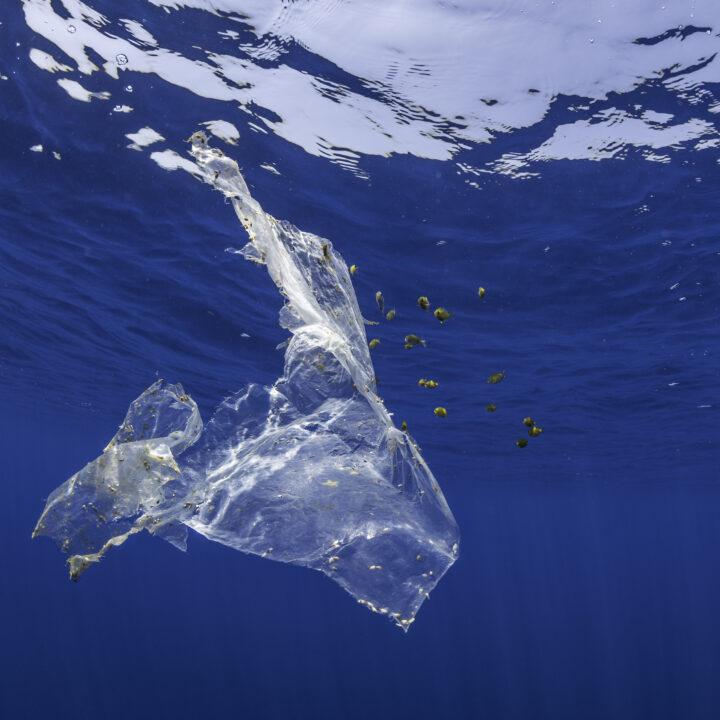 plast,påse,vatten,hav,blå