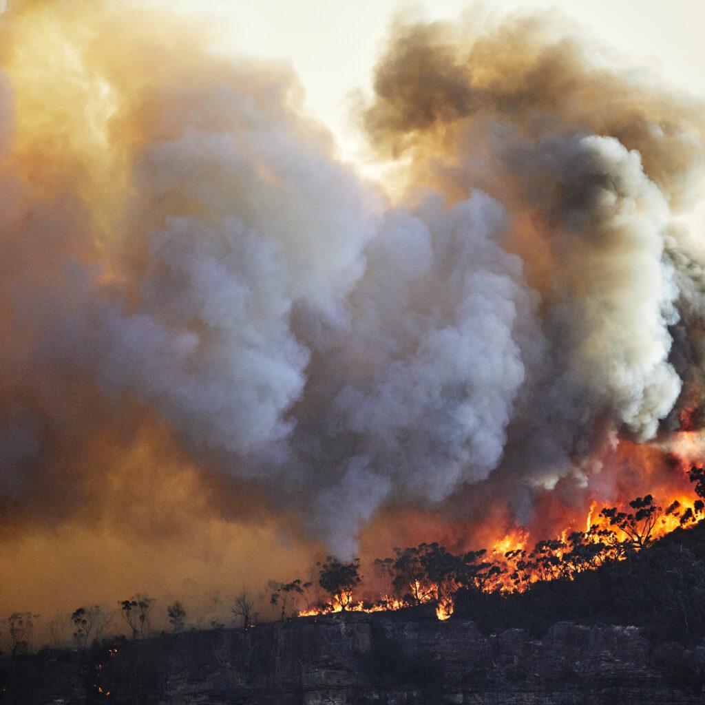 Skogsbrand i Australien.