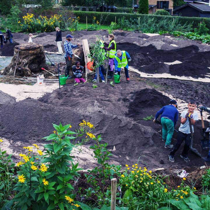 skolträdgård, gyttorp, gyttorpsskolan, odling