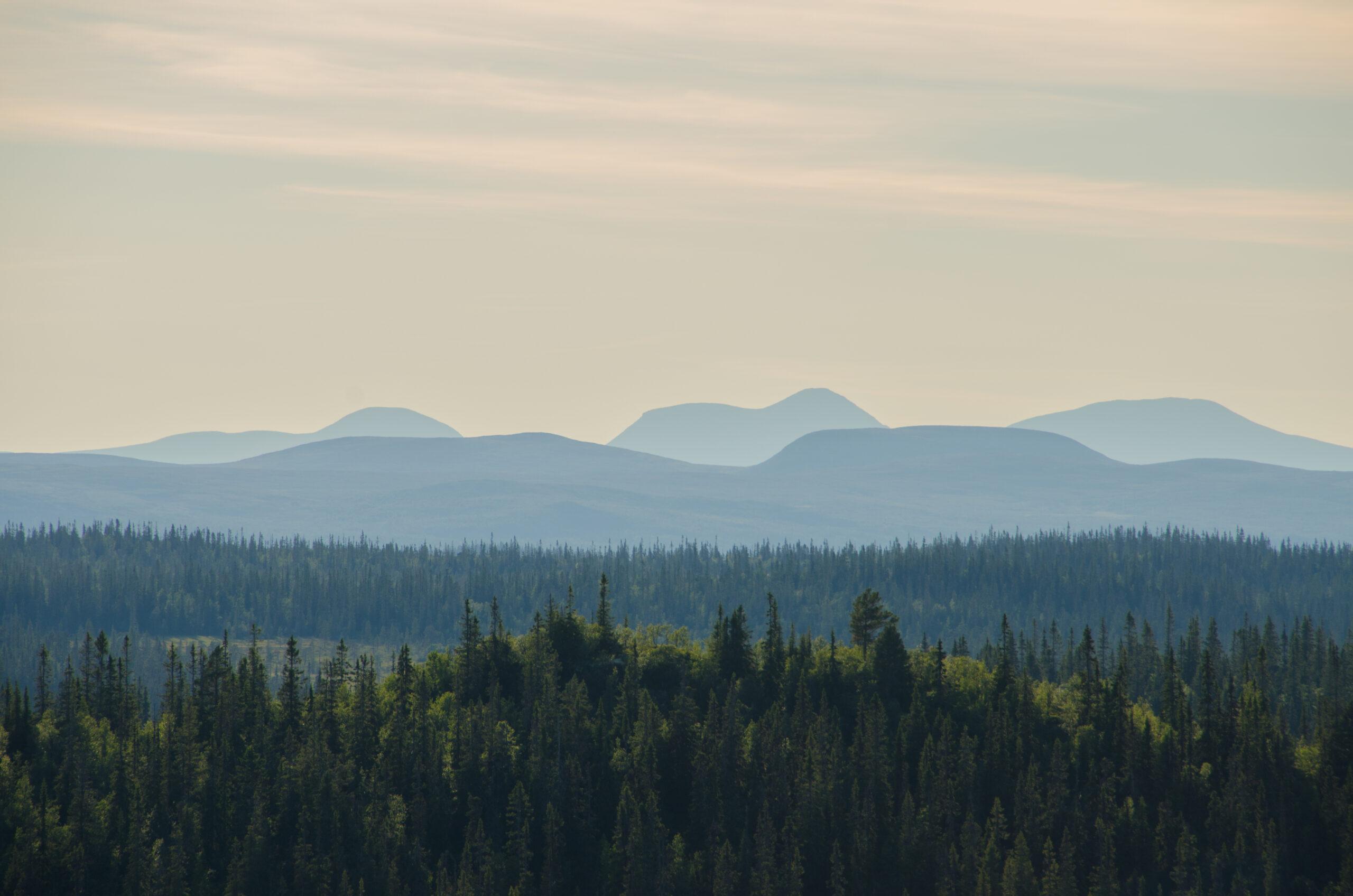naturskog,urskog,gammelskog,fjällen,naturskyddsfšreningen,landskap,skog