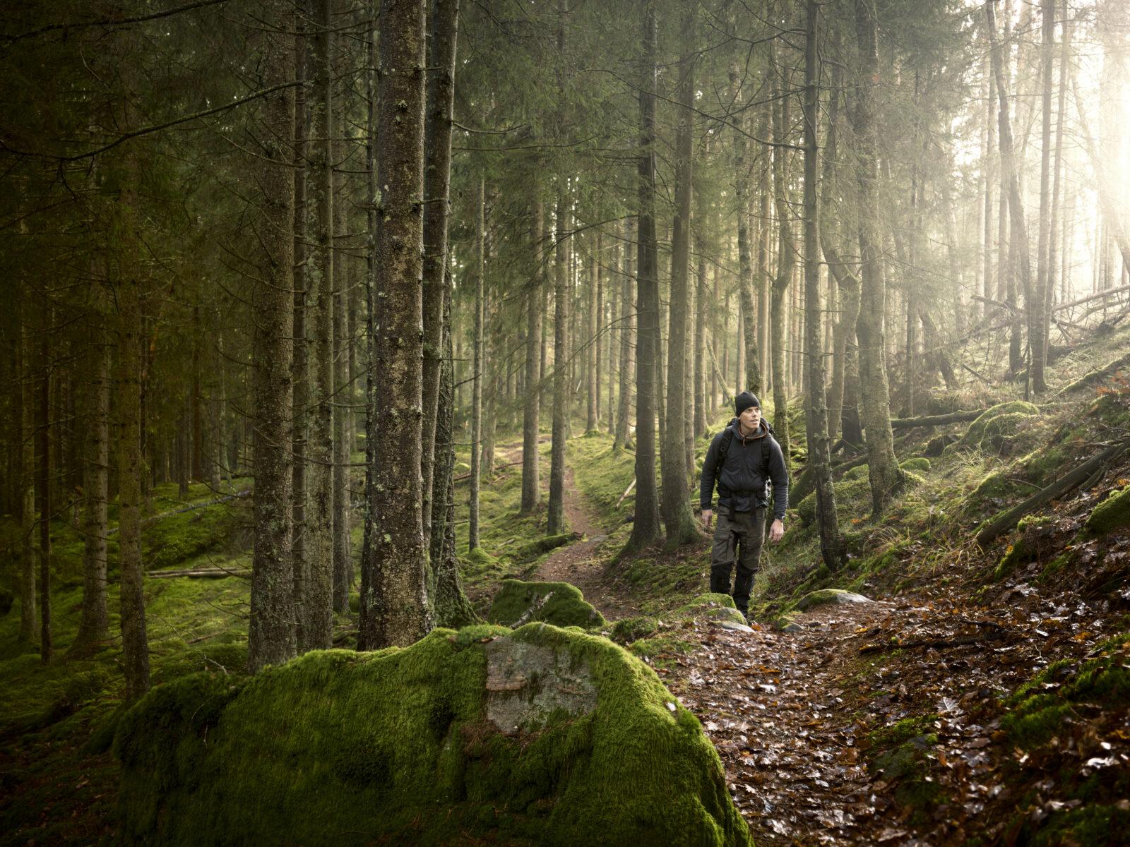 Man på vandring i skogen. Levande skogar.