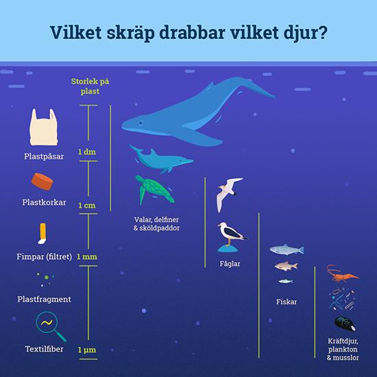 plast, mikroplast, hav, plastpåse, djur, nedskräpning