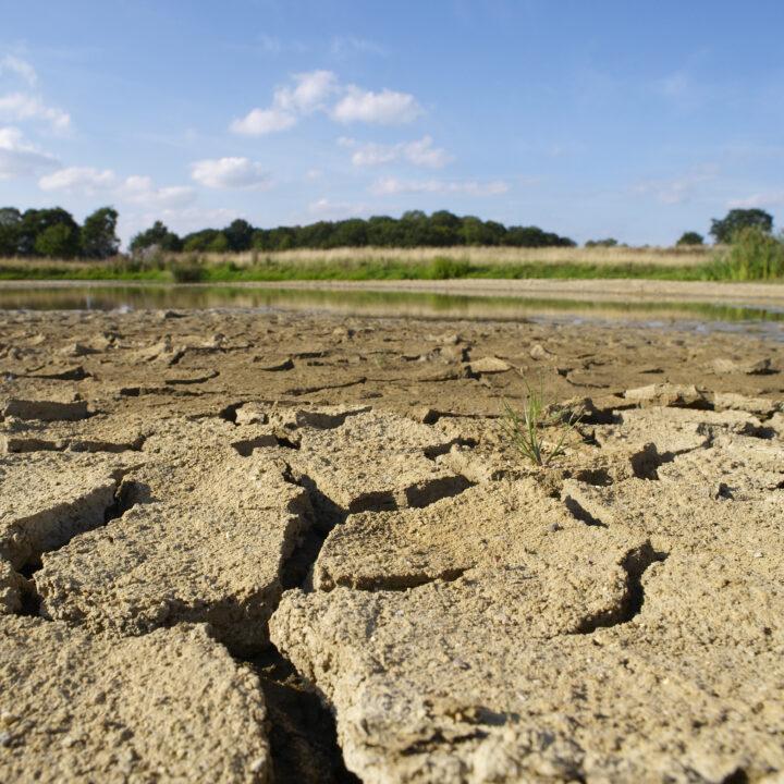 Torka, klimatförändringar, värme, sommar, miljö.