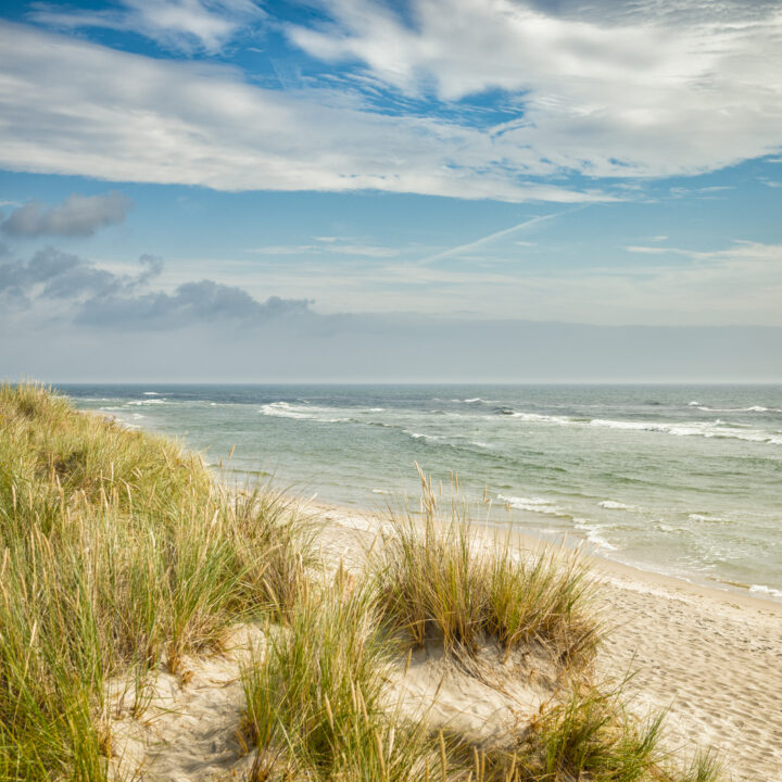 sandhammaren, strand, grästuva, sand, badstrand, strandskydd, grästuvor, bad, sommar, österlen, skåne,