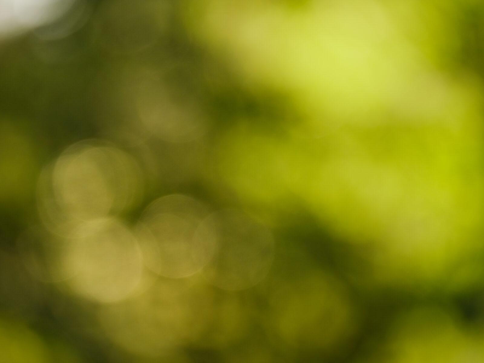 suddig,sol,grönska