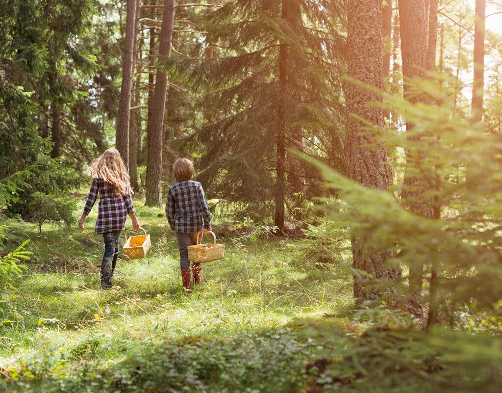 plocka svamp, svensk skog, naturaktivitet, människor, utomhus, vandra, skogspromenad,