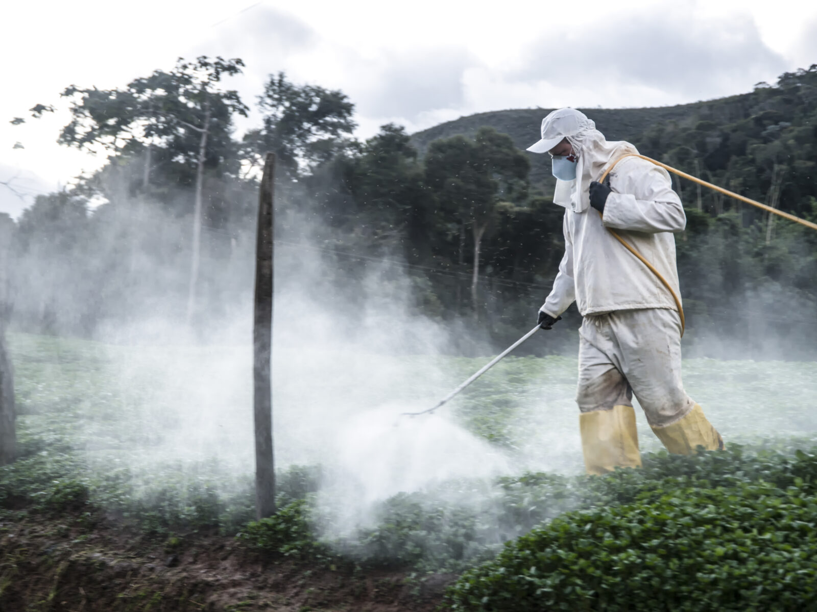 Bekämpningsmedel, Brasilien, Jordbruk, Rio de Janeiro