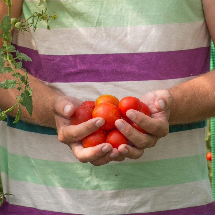 Vad du väljer att äta är avgörande för hur stor klimatpåverkan din mat har. Att välja vegetabilier är det enklaste och viktigaste du kan göra för att äta mer klimatvänlig mat.