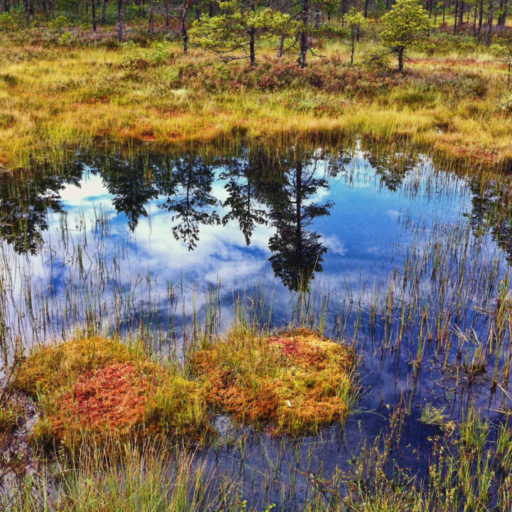 hällefors, landscape, emotion, våtmark, sjö, bog,