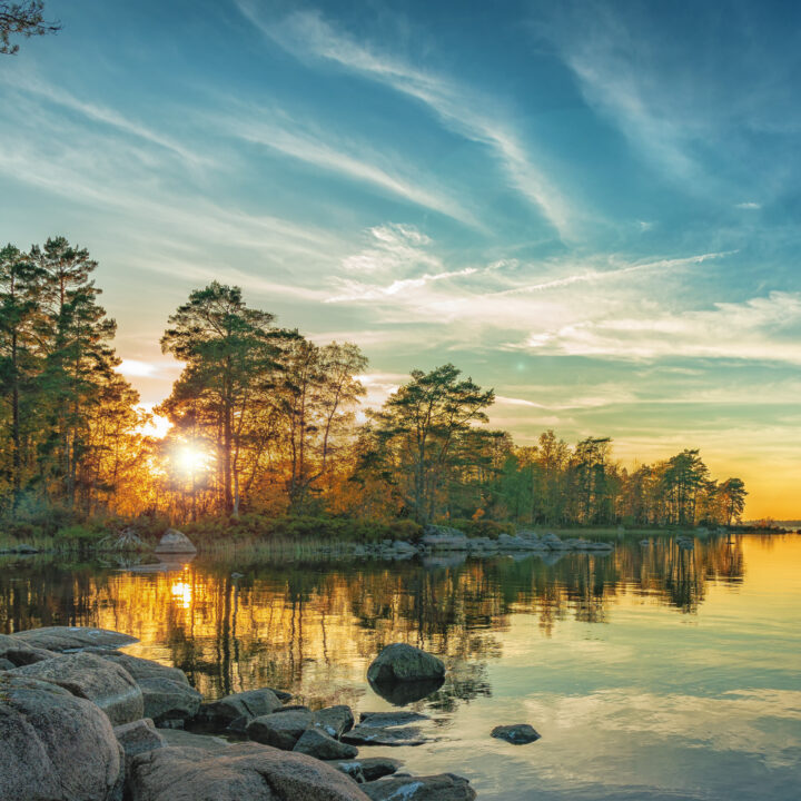 träd, kväll, vår, naturlig, vy, vacker, moln, bakgrund, scen, solsken, lugn, ljus, grön, färg, gyllene, panorama